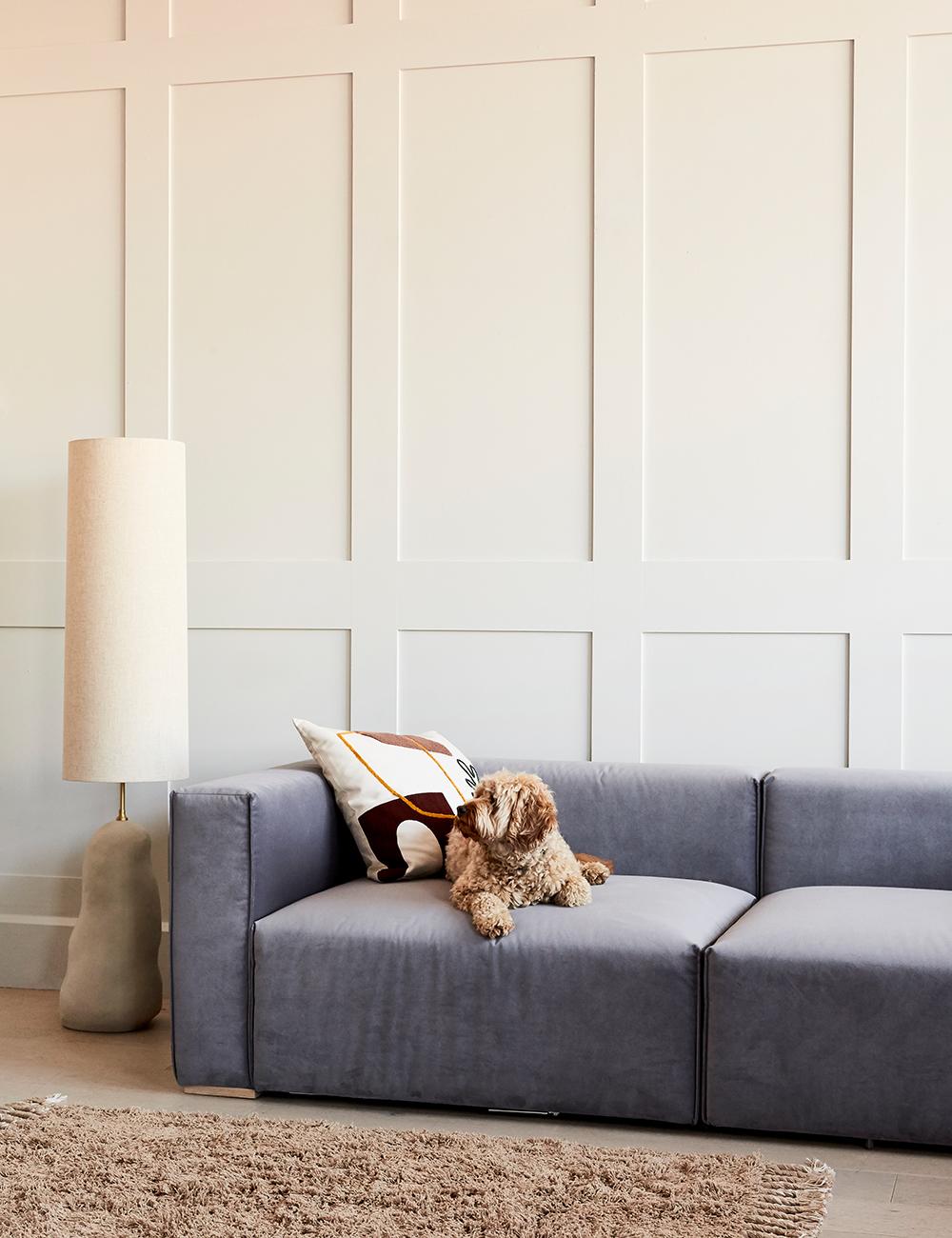 Read: How to Choose a Pet Friendly Sofa
