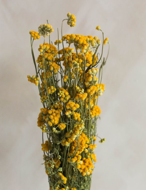 Dried Natural Yellow Iona