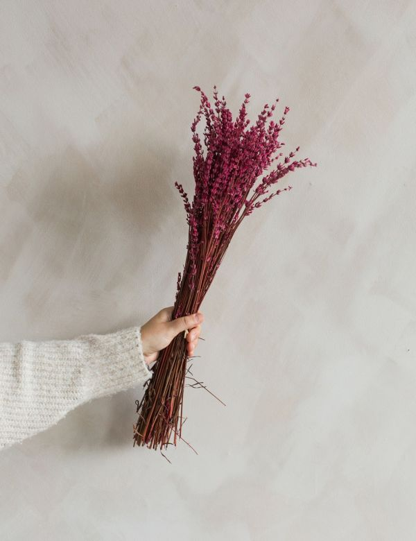 Dried Pink Lavender