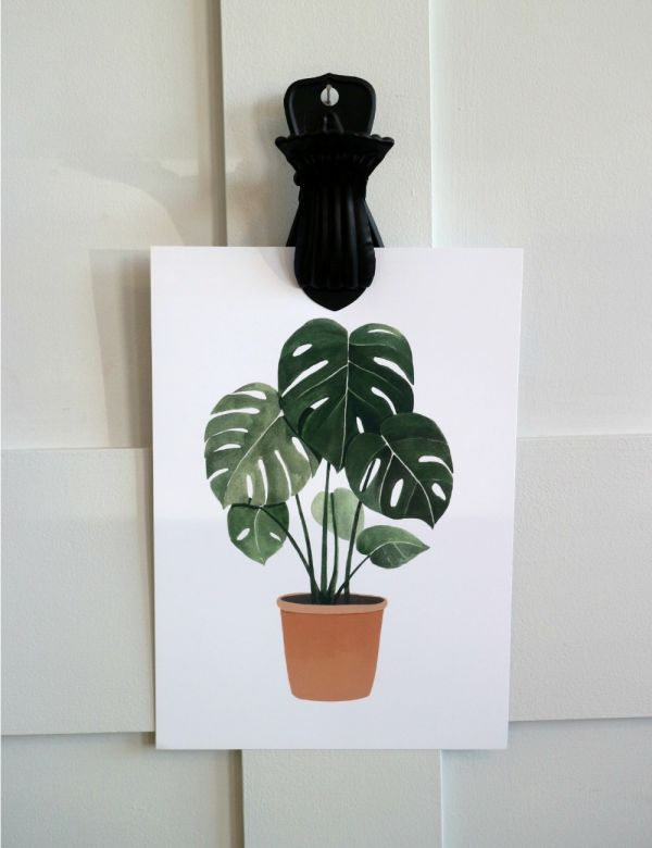 Hermano Gato Monstera Plant A4 Print