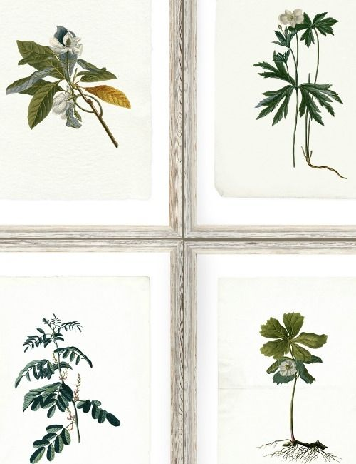 Mind The Gap Wallpaper Collection - Botany