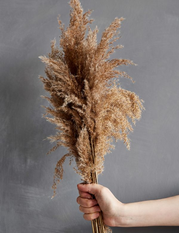 Dried Brown Pampas Grass