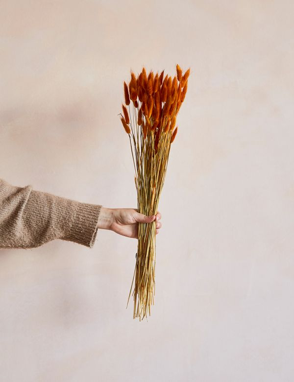 Dried Grasses - Rust Bunny's Tails