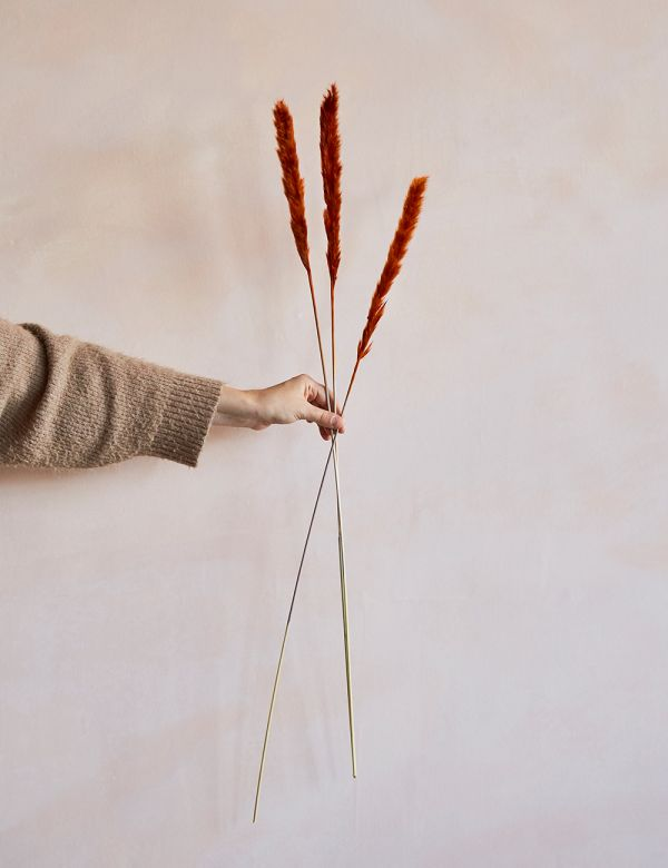 Dried Grasses - Rust SIlvergrass