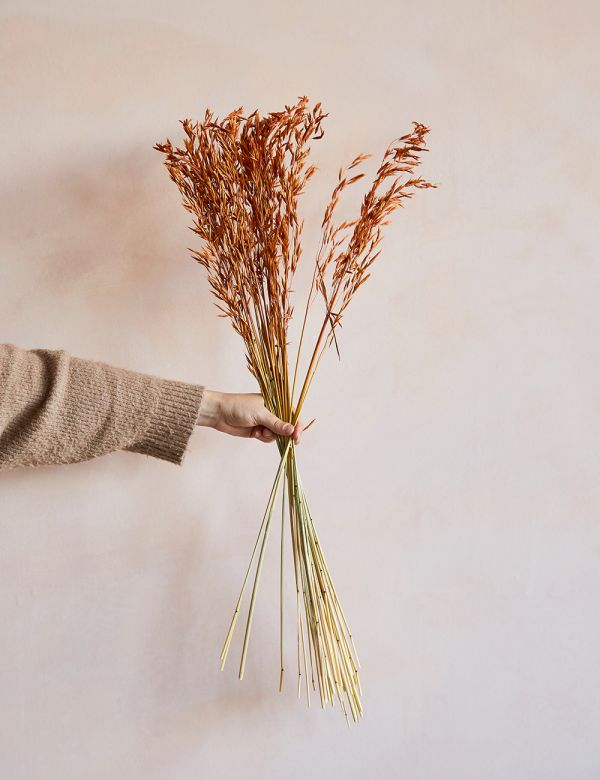 Dried Grasses - Rust Wheatgrass