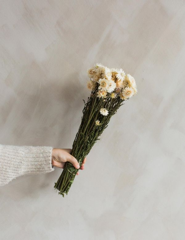 Dried Natural White Straw Flowers