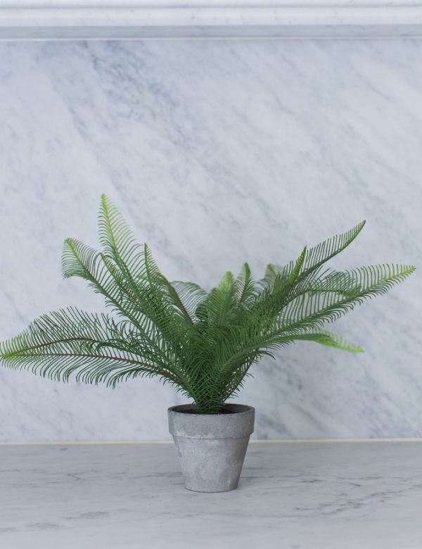 Faux Feathered Fern Plant