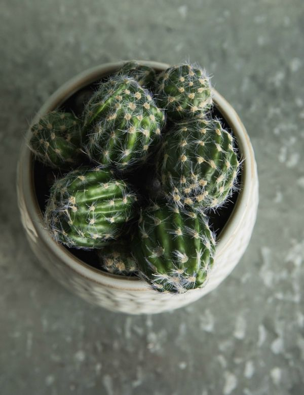 Faux Floral Cactus - Two Sizes Available