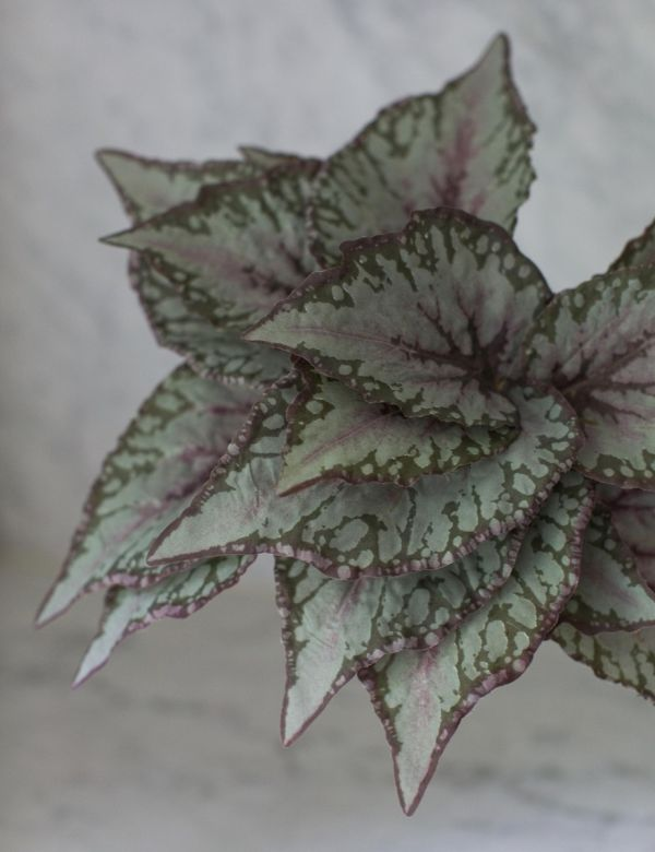 Faux Green & Pink Begonia Leaf Stem