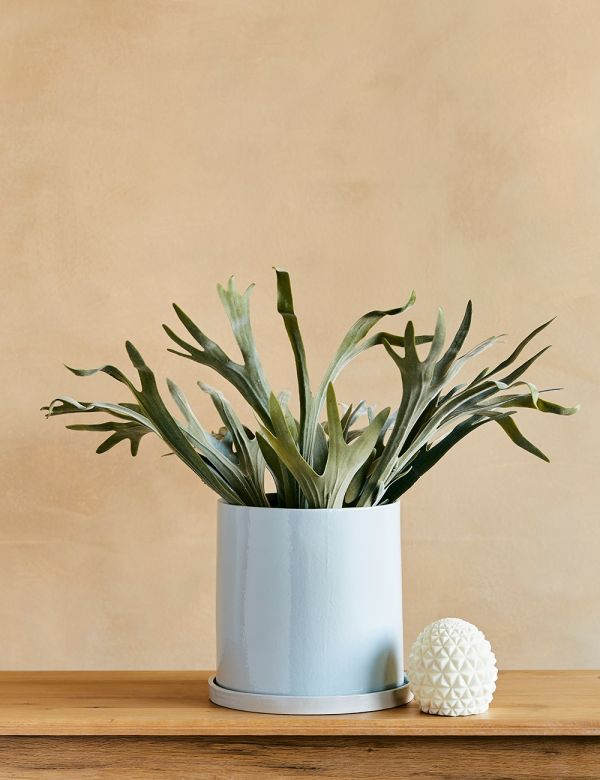 Large Blue Plant Pot With Saucer