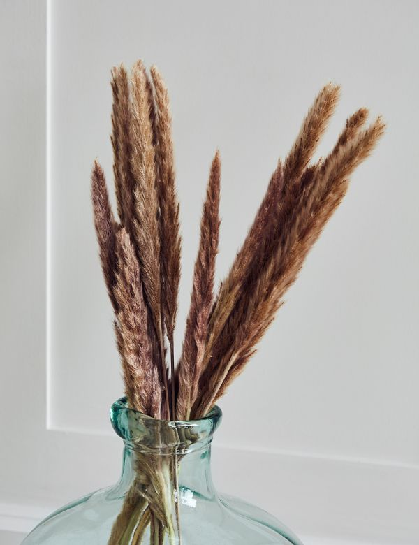 Natural Dried Silvergrass