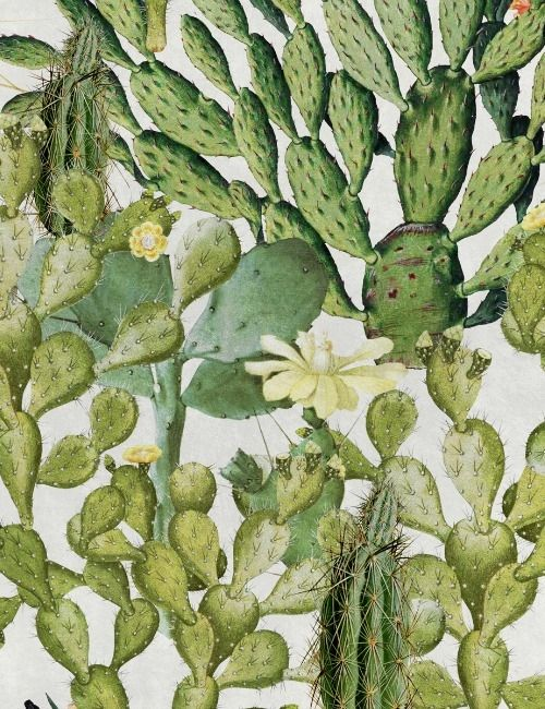 Mind The Gap Wallpaper Collection - Opuntia