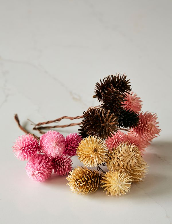 Set of Four Short Dried Thistle Stems