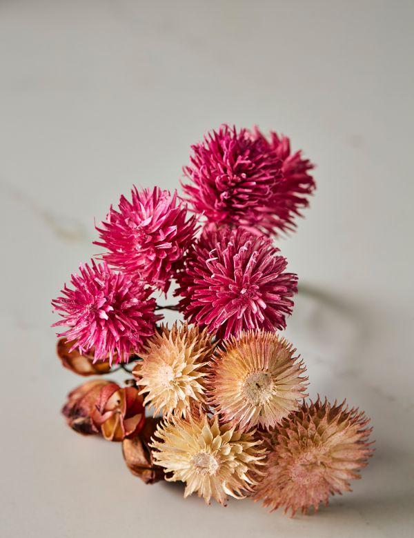 Set of Three Dried Flower Stems - Blush